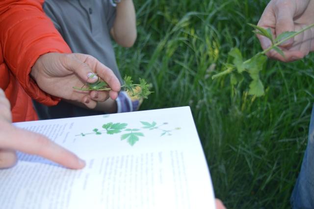 Är det samma plantar som stor i bok